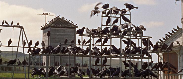 thebirds-mdc